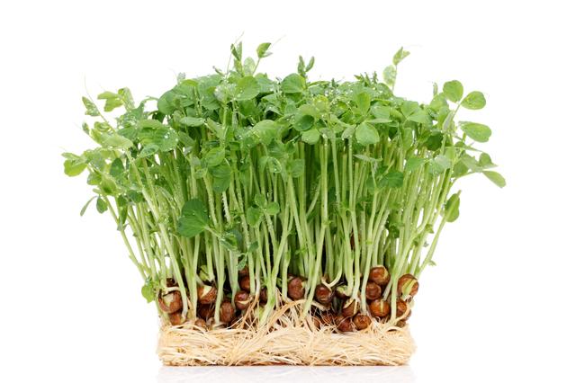 コスパ抜群でビタミンも豊富!豆苗の栄養とレシピを紹介