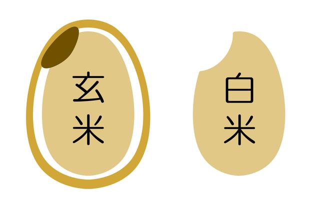 玄米と白米の構造図