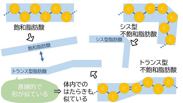 飽和脂肪酸とトランス脂肪酸