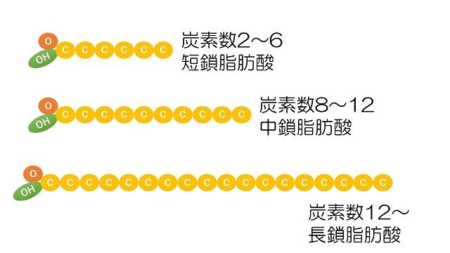 脂肪酸の分類(鎖)