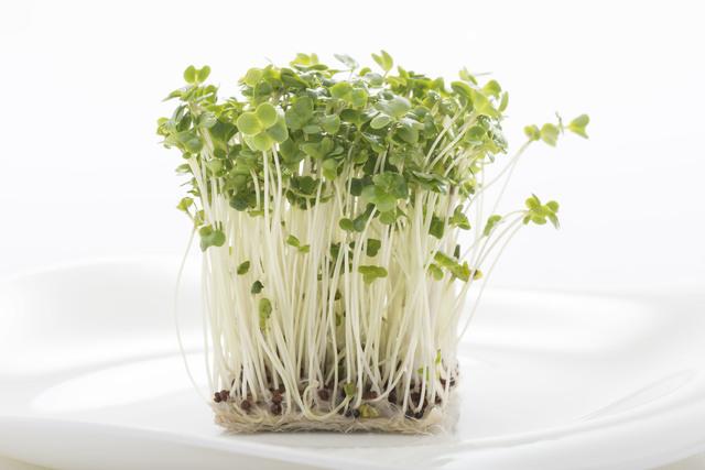 ブロッコリースプラウトの栄養効果は期待値低め? 簡単調理が魅力